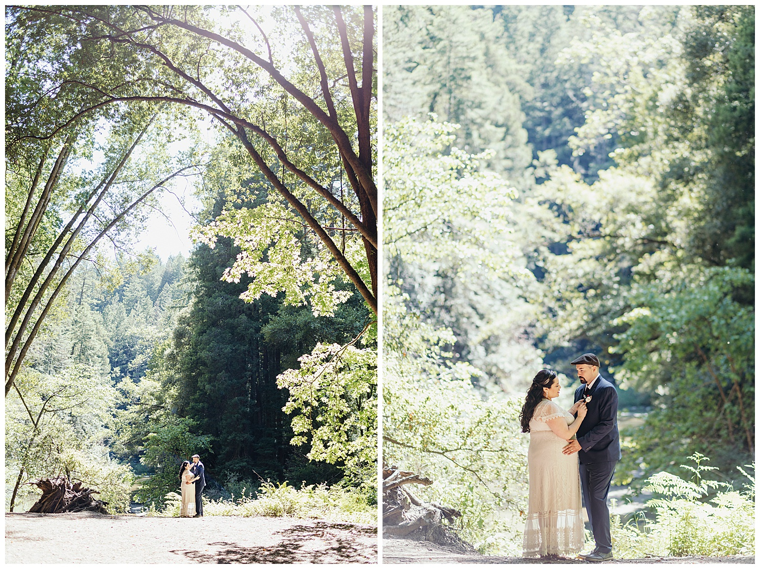 Wedding portraits under large trees in Henry Cowell redwoods