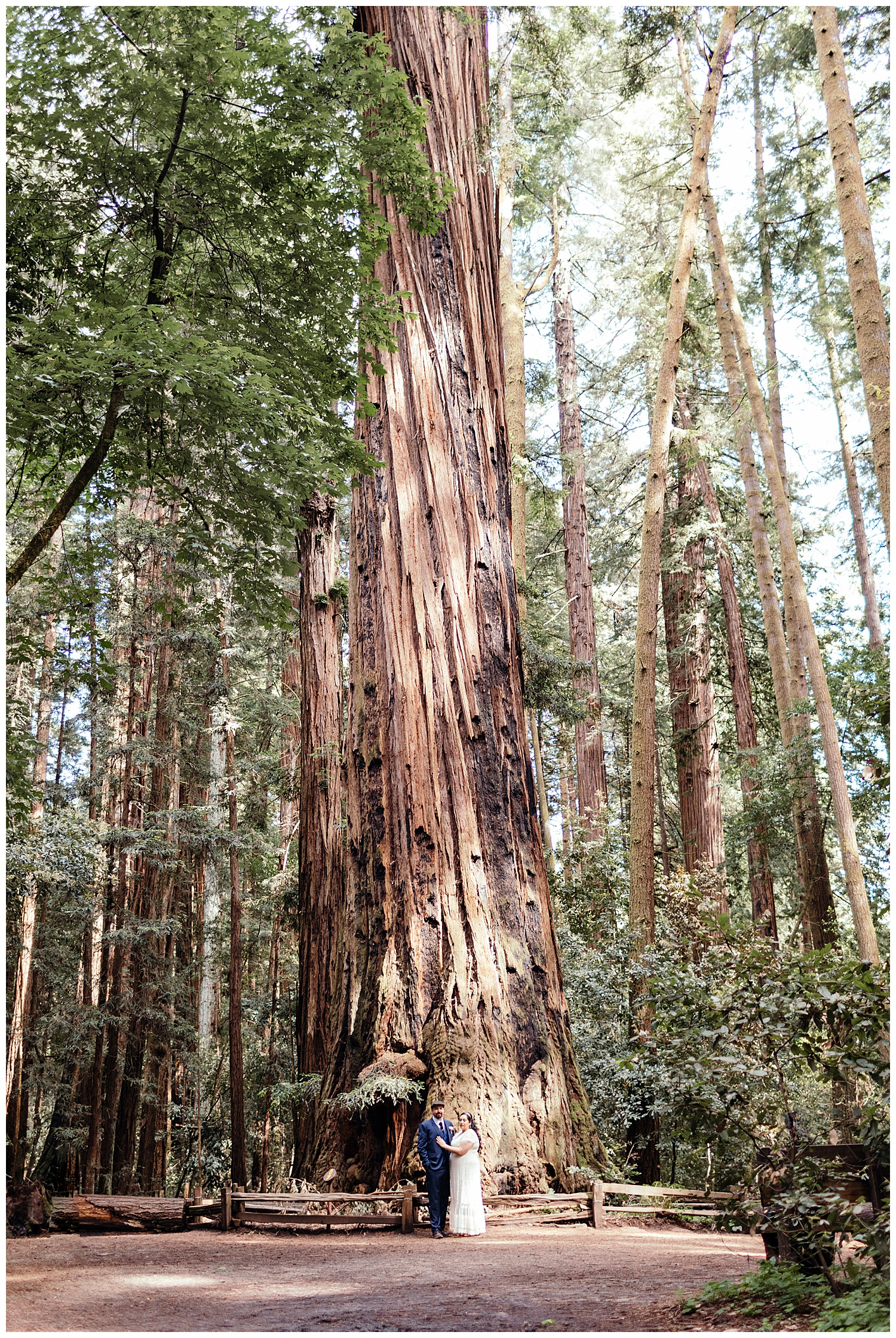 Bride and groom in front of large redwood tree in Henry Cowell in Felton