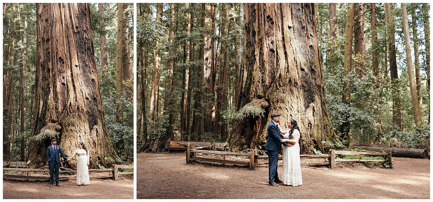 Bride and groom portraits in front of redwood tree